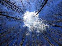 Nube bianca Fotografia Stock Libera da Diritti