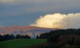 Nube blanca, colinas marrones, pinos oscuros imagen de archivo libre de regalías