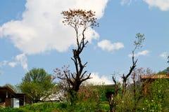 Nube con el árbol hermoso Manali la India Fotos de archivo libres de regalías