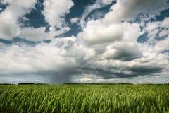 Nube de lluvia del verano sobre campo de trigo Foto de archivo libre de regalías