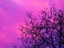 Nube detrás del árbol Imagen de archivo libre de regalías
