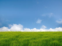 Nube e campo Immagini Stock