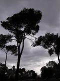 Nube en el cielo Imagen de archivo libre de regalías