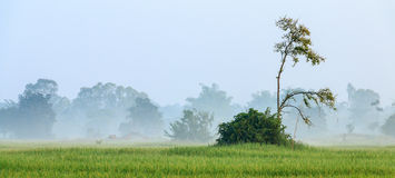 Nube en la granja del arroz Foto de archivo