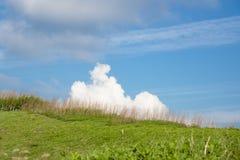 Nube linda en la hierba Fotografía de archivo