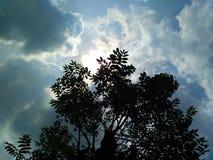 Nube y árboles Imagen de archivo libre de regalías