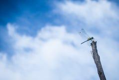Nube y libélula hermosas fotos de archivo