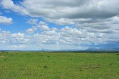 Nube y prado Imagen de archivo libre de regalías