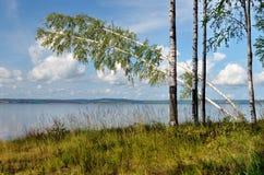 Nubes, abedul, bosque Imágenes de archivo libres de regalías