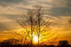 Nubes amarillas del árbol de Sun de la puesta del sol foto de archivo