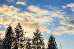 Nubes amarillas móviles en un cielo azul con los árboles de la silueta durante Foto de archivo