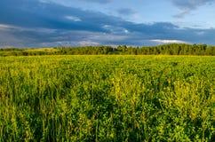 nubes azules en un claro verde Fotos de archivo