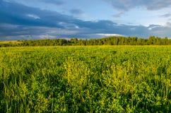 nubes azules en un claro verde Imagenes de archivo