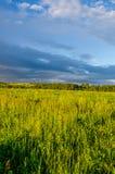 nubes azules en un claro verde Imagen de archivo libre de regalías