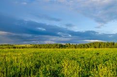 nubes azules en un claro verde Foto de archivo libre de regalías