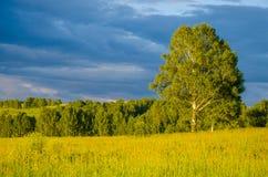 nubes azules en un claro verde Imagen de archivo