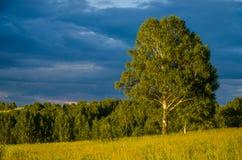 nubes azules en un claro verde Imágenes de archivo libres de regalías