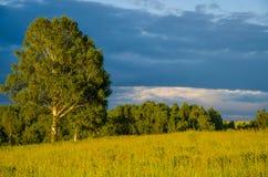nubes azules en un claro verde Foto de archivo
