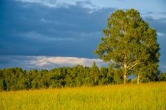 nubes azules en un claro verde Fotos de archivo libres de regalías