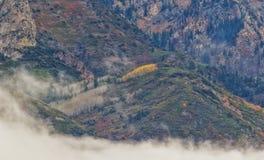 Nubes bajas y álamos tembloses de oro Fotografía de archivo libre de regalías