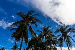 Nubes blancas con las palmas en frente Foto de archivo libre de regalías