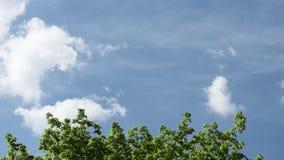nubes blancas en el cielo azul metrajes