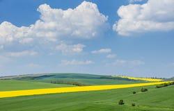 Nubes blancas hermosas sobre campos coloreados de la primavera Imagen de archivo libre de regalías