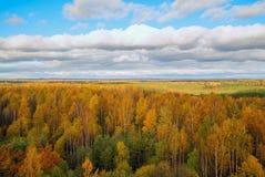 Nubes blancas sobre los árboles amarillos, la visión desde la altura Autumn Landscape Fotografía de archivo