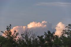Nubes blancas y rojas detrás de árboles fotografía de archivo libre de regalías