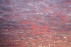 nubes Blanco-rosadas contra el cielo azul Fotografía de archivo