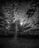 Nubes blancos y negros de la luna de Cypress Fotos de archivo libres de regalías
