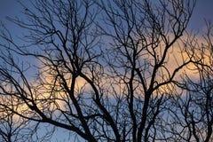 Nubes coloreadas de la mañana, silueta del árbol Fotografía de archivo