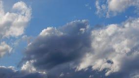Nubes de c?mulo hermosas en el cielo almacen de video
