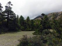 Nubes de la monzón sobre los llanos Himalayan del pino Foto de archivo libre de regalías