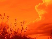 Nubes de la tarde con las ramas fotografía de archivo libre de regalías