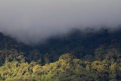 Nubes de lluvia sobre el bosque de la nube, Ecuador Foto de archivo libre de regalías