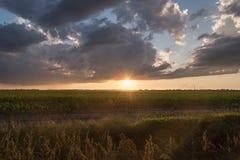Nubes de lluvia y cielo azul sobre puesta del sol del campo de maíz imágenes de archivo libres de regalías