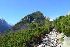 Nubes de madera del verde de la naturaleza de la montaña Imagen de archivo libre de regalías
