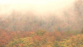 Nubes de mentira bajas sobre los tops del árbol almacen de metraje de vídeo