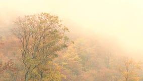 Nubes de mentira bajas sobre los tops del árbol almacen de video
