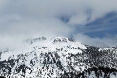 Nubes de Rose Nevada Covered In Snow With del soporte Fotos de archivo libres de regalías