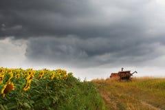 Nubes de tormenta del campo del girasol Fotos de archivo libres de regalías