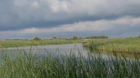 Nubes de tormenta sobre el lago con las cañas almacen de video