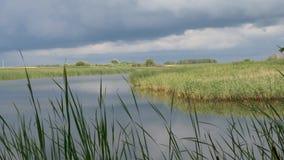 Nubes de tormenta sobre el lago con las cañas metrajes
