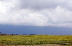 Nubes de tormenta sobre los girasoles Imagen de archivo libre de regalías