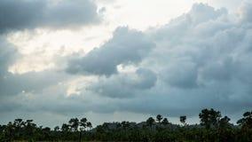 Nubes de tormenta sobre selva tropical metrajes