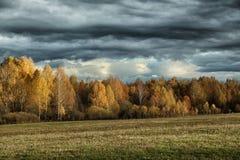 Nubes de tormenta sobre una arboleda y un campo del abedul en otoño Fotografía de archivo libre de regalías