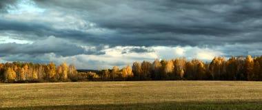 Nubes de tormenta sobre una arboleda y un campo del abedul en otoño Imagenes de archivo