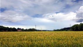Nubes del blanco del cielo del gris azul del bosque del otoño Fotos de archivo