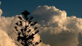 Nubes del cielo del árbol almacen de video